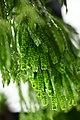 Plant of Thailand - 22.jpg