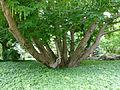 Planten un Blomen 4.jpg