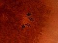 Pleioplana atomata (YPM IZ 073834) 01.jpeg