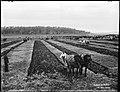 Ploughing match (2362682155).jpg
