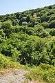 Plymbridge Woods south of Cann Viaduct (4271).jpg