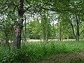 Pod Farským lesem 03.jpg
