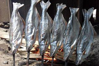African sea catfish species of fish