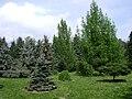 Poland. Warsaw. Powsin. Botanical Garden 044.jpg