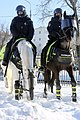 Police riding horse.jpg