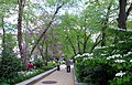 Pollinator Garden in April (17615023375).jpg