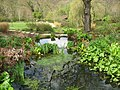 Pond and stream at RHS Rosemoor - geograph.org.uk - 1379957.jpg