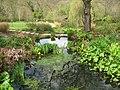 Pond and stream at RHS Rosemoor - geograph.org.uk - 1379957.jpg
