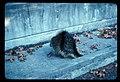 Porcupine (04026d3e19c04aeab745cd7826937593).jpg