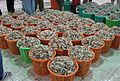 Prawns readyfor auction.JPG