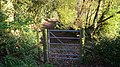 Pretty footpath at Halnacker Hill - geograph.org.uk - 1250200.jpg