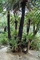 Preveli Palm Trees 01.JPG