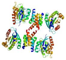 Protein ARL1 PDB 1r4a.png