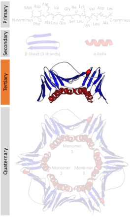 Protein Tertiary Structure Analysis Essay - image 3