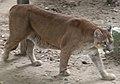 Puma beauval 07.JPG