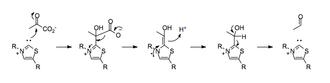 Umpolung - Mechanism of pyruvate decarboxylation