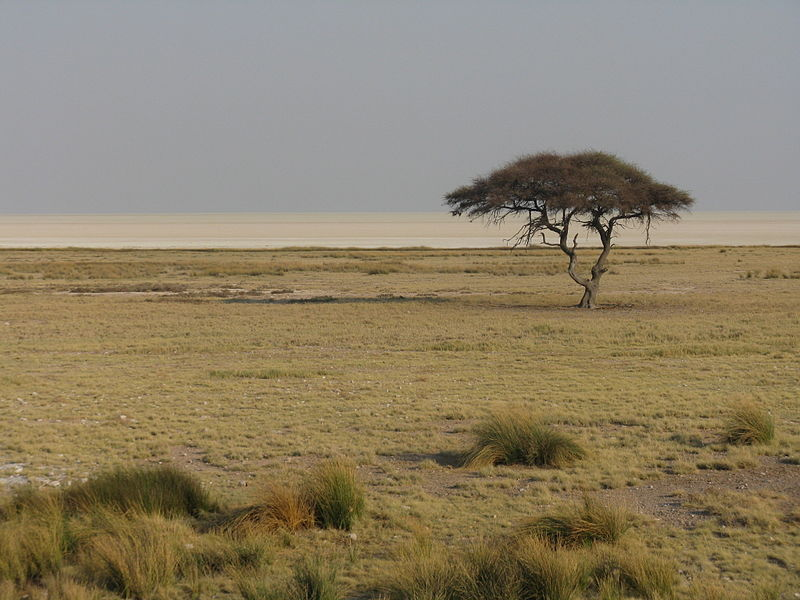 File:Quintessential Africa.JPG