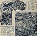 Rare Florida flowers and fruits (1897) (20548897945).jpg