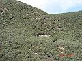 Rattlesnake Fire Memorial (4546277723).jpg