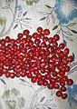 Red sandal wood seeds লাল চন্দন (সাভার, ঢাকা).jpg