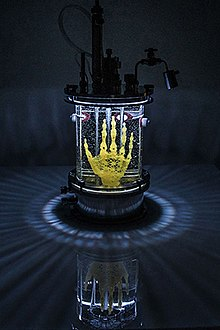 "English: ""REGENERATIVE RELIQUARY"" by Amy Karle, 2016 bioart sculpture of hand design 3D printed / bioprinted on microscopic level in trabecular structure out of pegda hydrogel to create scaffold for human MSC stem cell culture into bone."