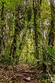 Regenwald in Boquete (27238145411).jpg