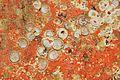 Restes de coquillages et d'algues sur un voile de quille (16).JPG