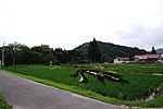 Rice Paddy Field Art in Yonezawa 2015 (18807482273).jpg