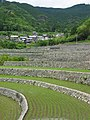 Rice Terrace Fukano01.jpg