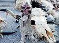 Rijecki karneval 140210 41 Dondolasi.jpg