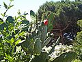Riomaggiore 390-park 01.jpg