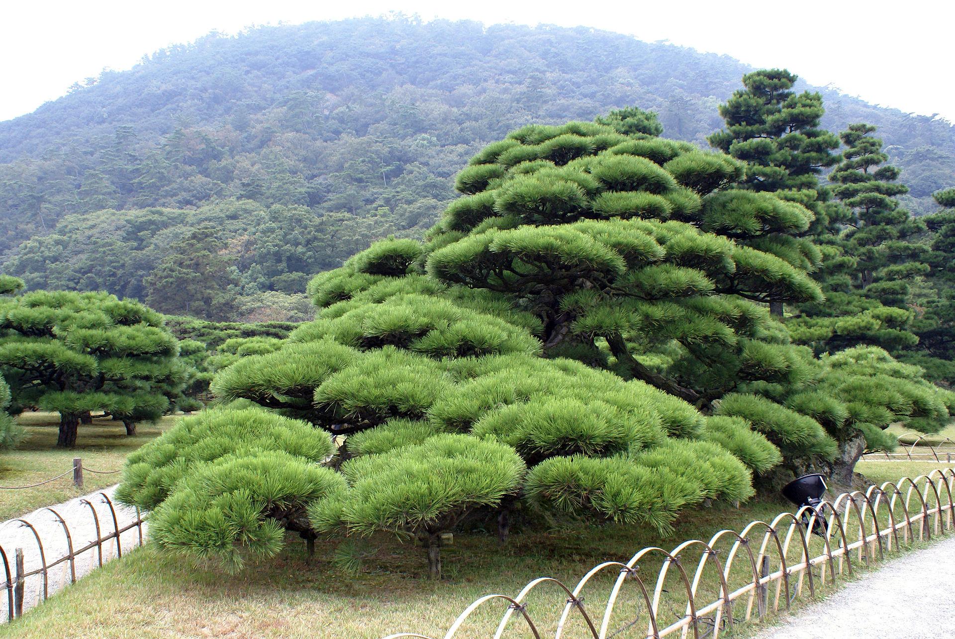 Jardin Japonais Art Decoratif