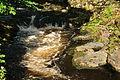 River Tavy in Tavistock (4919).jpg