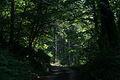 Road in Bicton Wood - geograph.org.uk - 465208.jpg