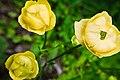 Romania flowers (15087782082).jpg