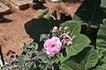 Rose flower 2.jpg