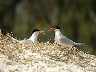 Haul Round Island island in Northern Territory, Australia