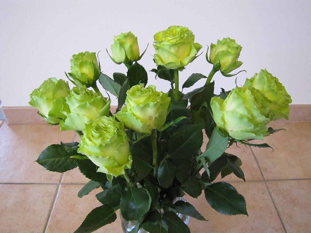 Rose verte wikip dia - Comment couper une rose sur un rosier ...