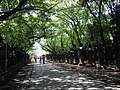 Row of stone lanters leading to Toshogu Shrine - panoramio.jpg