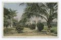 Royal and Coconut Palms, Hibiscus, Palm Beach, Fla (NYPL b12647398-74038).tiff