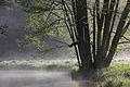 Rzeka Pasłęka o świcie.JPG
