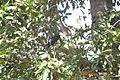 SAN BIRDS 24.jpg