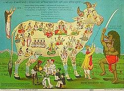 Sacred cow2