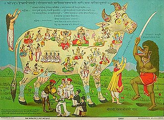 Shambo - The image here illustrates the Hindu belief that each part of the cow embodies a particular deity. For example, Brahma is her back, while Vishnu is her throat. To the right, a man is seen as protecting the cow from being slaughtered by the demon Kali.