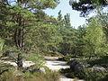 Saint-Pierre-lès-Nemours (77), le Mont Sarrasin par le GR 13, sens est-ouest 10.JPG
