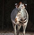 Saint Louis Zoo 022.jpg