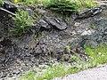 Sandorite lamprophyre with xenoliths (Sandor Dike, Neoarchean, 2.703 Ga; Route 17 roadcut northeast of Wasp Lake & north of Wawa, Ontario, Canada) 2 (48341322926).jpg