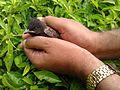 Save birds.jpg