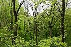 Schönstedt, Nationalpark Hainich, Ausblick vom Baumkronenpfad -- 2017 -- 0197.jpg
