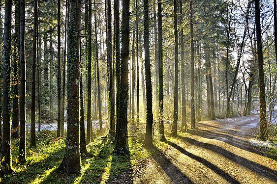 Schatten im Wald.jpg